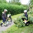 aus sicherheitsgründen gefällter Baum - Berliner Straße